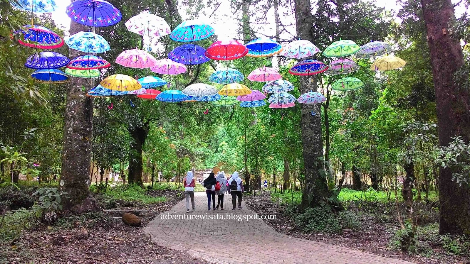 Pesona Pariwisata Seni Budaya Jendela Inspirasi Wisata Alam Mojosemi Forest