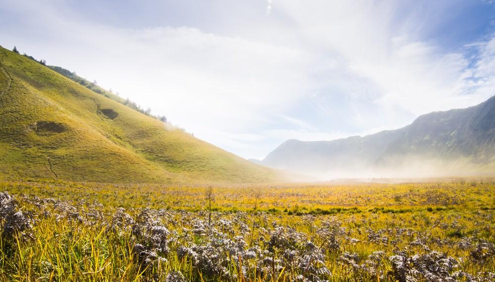 35 Tempat Wisata Probolinggo Wajib Dikunjungi Waktu Liburan Padang Rumput