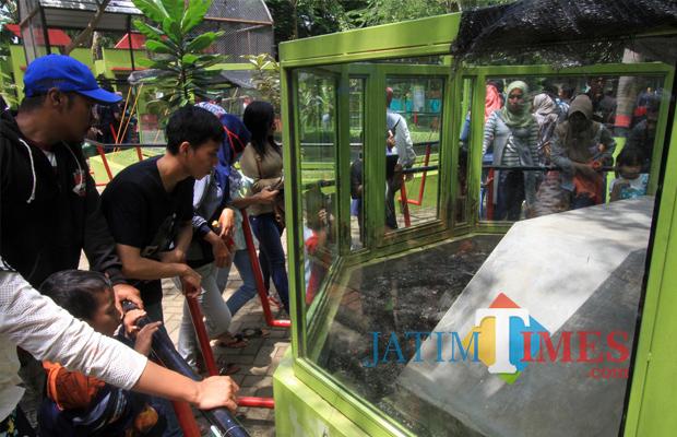 Kebun Binatang Mini Probolinggo Diserbu Pengunjung Jatim Times Suasa Bonbin