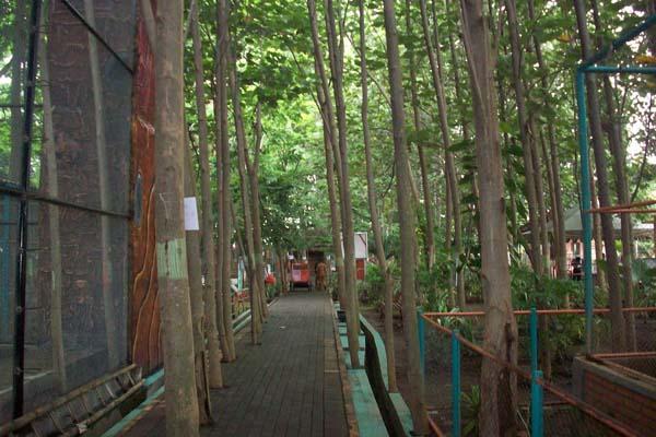 Taman Wisata Study Lingkungan Hidup Jenis Pepohonan Terdapat Disana Diantaranya