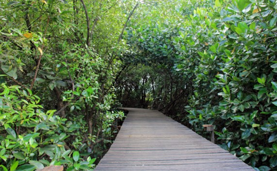 Tiket Masuk Wisata Mangrove Bjbr Probolinggo Kab Probolinggo 2019