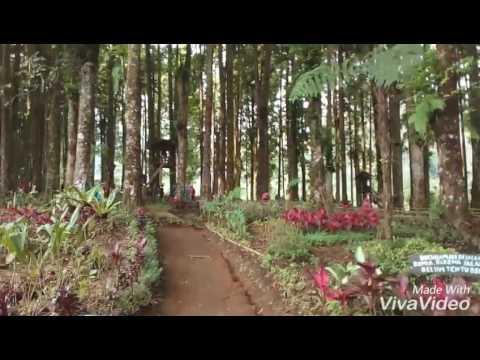 Kampung Kurcaci Purbalingga Youtube Kab