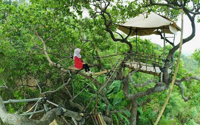 Lokasi Rute Menuju Pojok Khayangan Panusupan Purbalingga Wisatamy Rumah Pohon