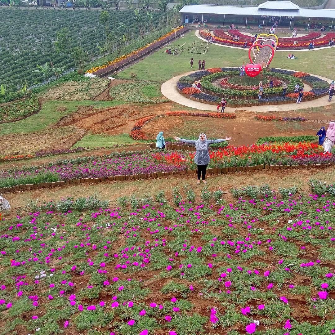 Rute Lokasi Kutabawa Flower Garden Purbalingga Taman Bunga Puncak Sibarat