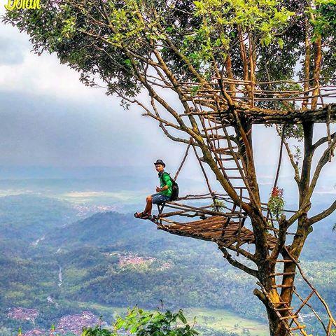 Igir Wringin Rumah Pohon Rembang Purbalingga Lokasi Wisata Kab