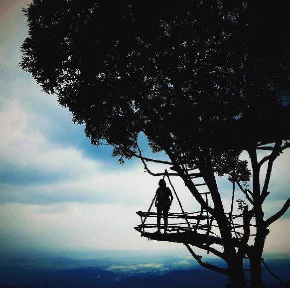 Istimewanya 38 Tempat Wisata Purbalingga Terkenal Igir Wringin Rumah Pohon