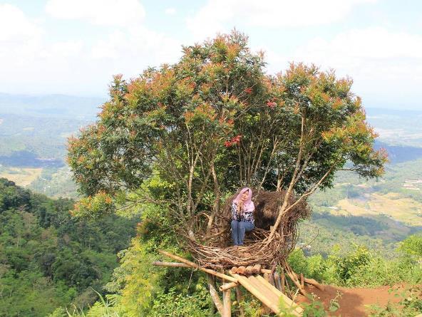 Istimewanya 38 Tempat Wisata Purbalingga Terkenal Puncak Sendaren Rumah Pohon