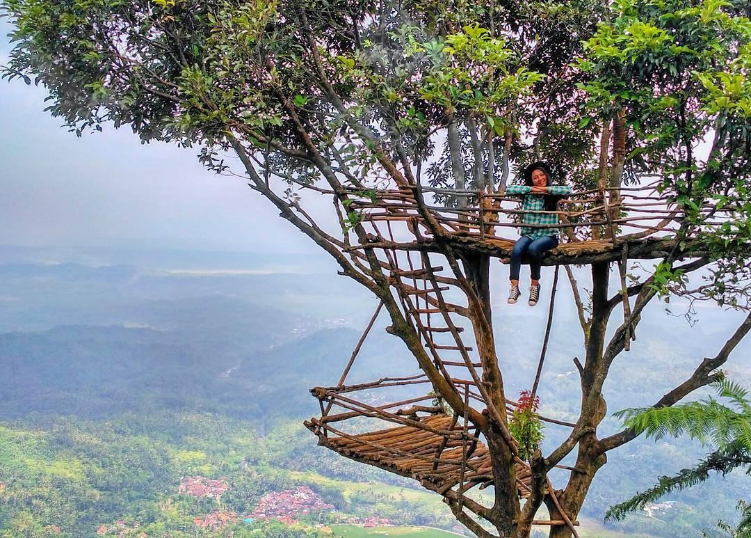 Tempat Ngadem Hits Purbalingga Rumah Pohon Igir Wringin Kab