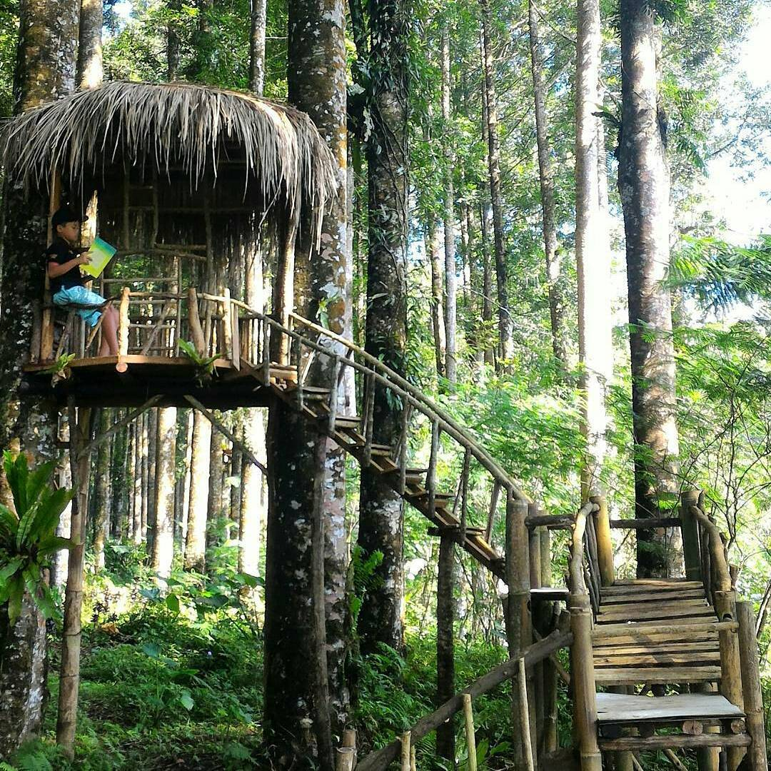 37 Wisata Purbalingga Bisa Banget Mempercantik Ruman Pohon Kampung Kurcaci