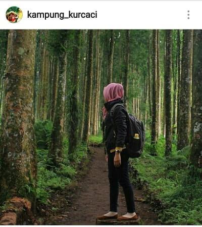 Kampung Kurcaci Purbalingga Wisata Ngehits Kota Perwira Hutan Ruman Pohon