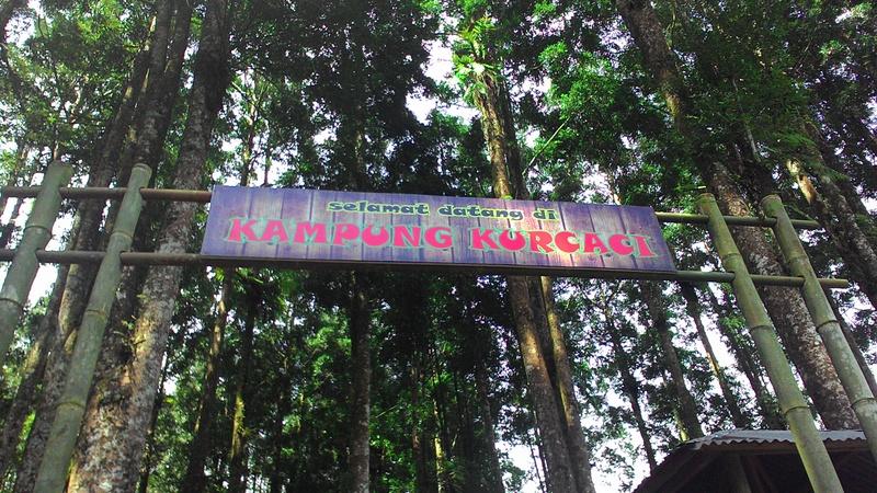 Kisahkasih Refleksi Diri Kampung Kurcaci Ruman Pohon Kab Purbalingga