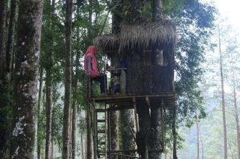 Menikmati Wisata Ala Hobbit Kampung Kurcaci Purbalingga Ruman Pohon Kab