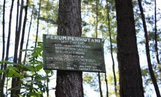 22 Tempat Wisata Purworejo Keren Tanahair Hutan Kusumo Asri Pantai