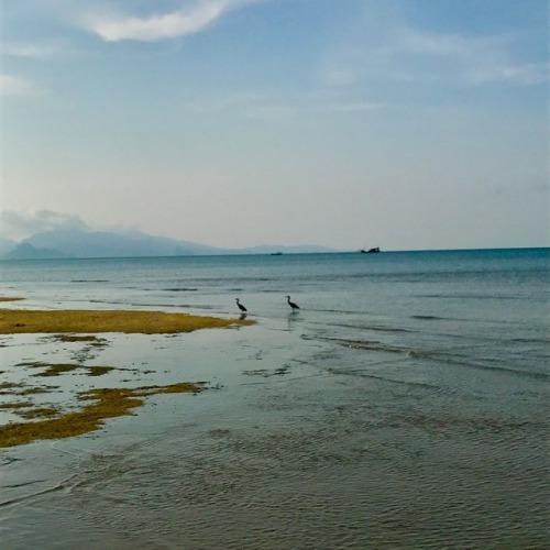 Pantai Pasir Tumblr Langit Laut Puncu Kab Purworejo