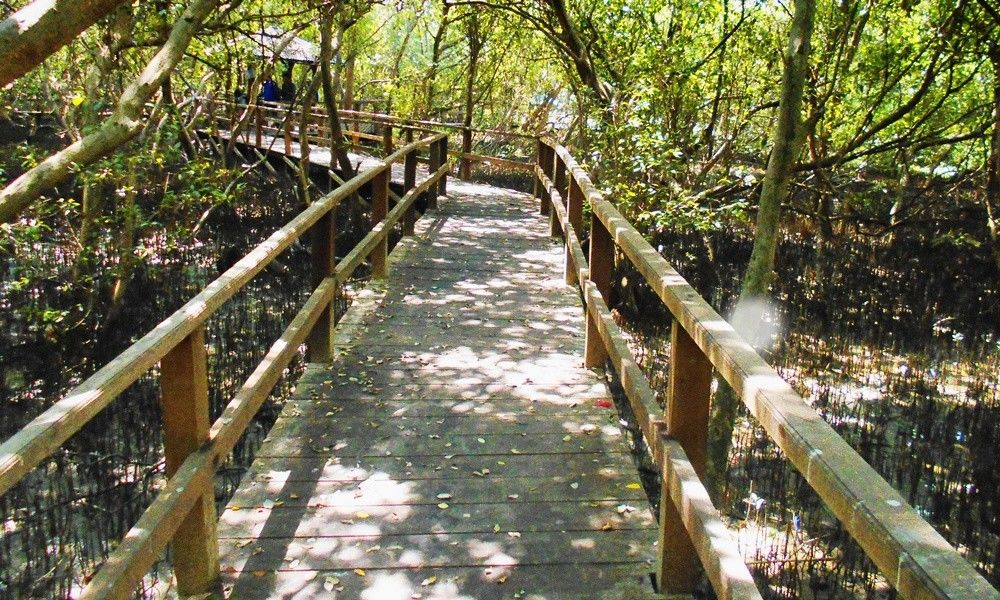 5 Wisata Mangrove Jawa Tengah Indahnya Kebangetan Dinas Taman Morosari