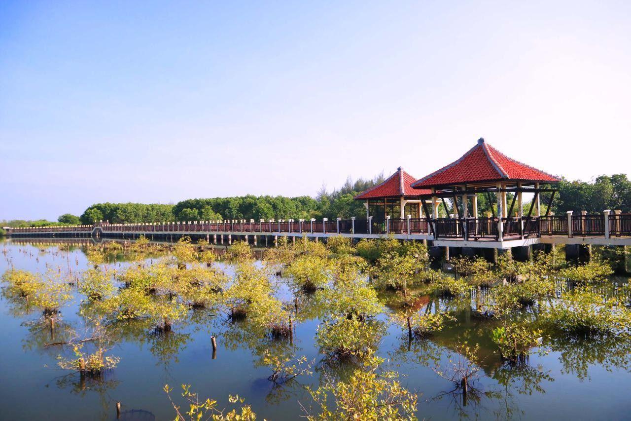 5 Wisata Mangrove Jawa Tengah Indahnya Kebangetan Hutan Pasar Banggi