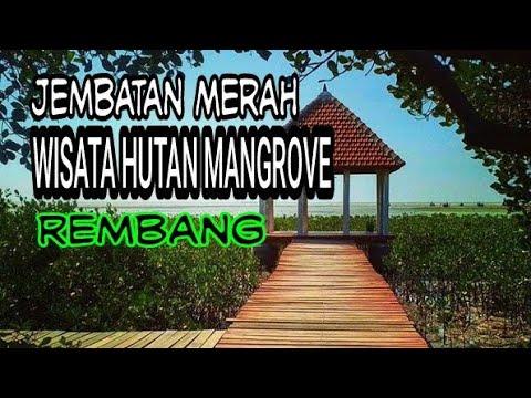 Berwisata Hutan Mangrove Rembang Youtube Pasar Banggi Kab