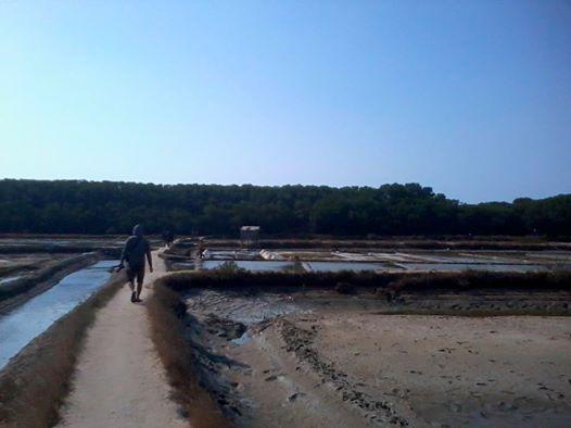 Berwisata Taman Hutan Mangrove Terbaik Indonesia Rembang Konservasi Bakau Terletak