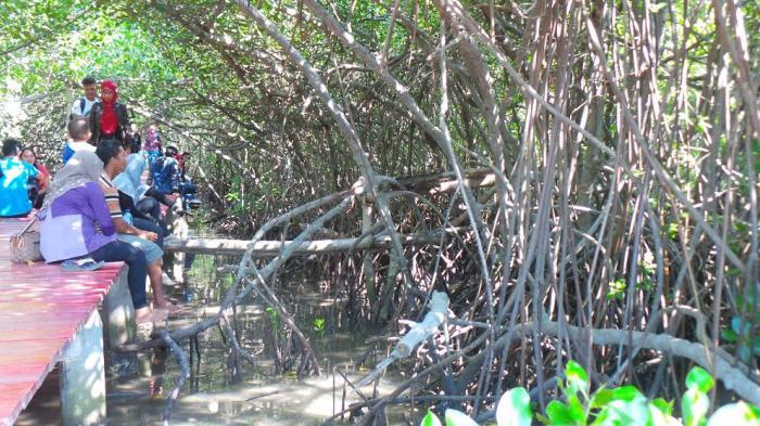 Cukup Rp 2 Ribu Bisa Ngabuburit Jembatan Merah Hutan Mangrove