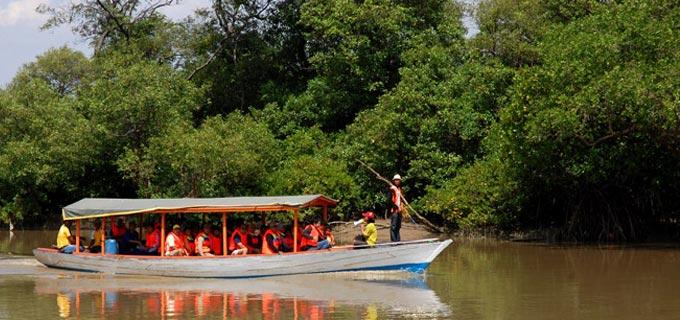 Ekowisata Hutan Mangrove Indonesia Segar Inspiratif Wonorejo Pasar Banggi Kab
