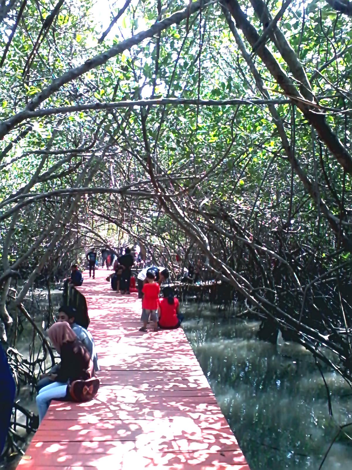 Find Destination Taman Konservasi Hutan Bakau Jembatan Merah Rembang Mangrove