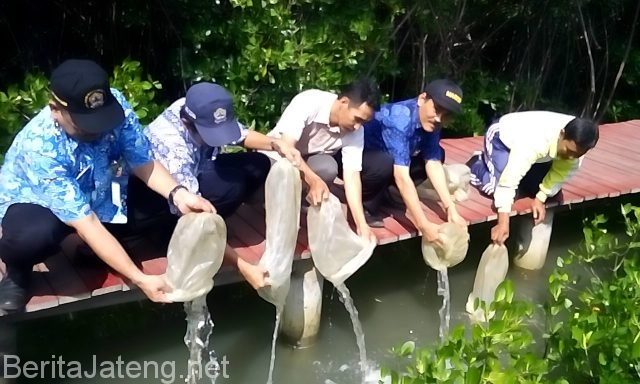 Hutan Mangrove Pasar Banggi Miliki Multi Fungsi Berita Jateng Pelepasan