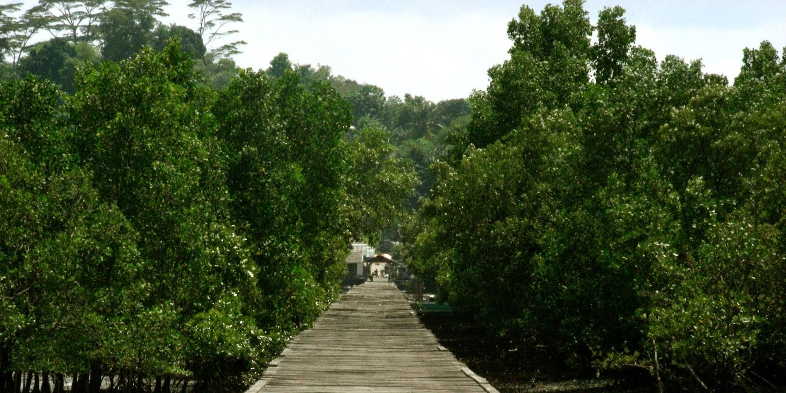 Hutan Mangrove Pasar Banggi Rembang Jawa Tengah Kab