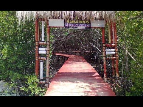 Jembatan Mangrove Rembang Jawa Tengah Youtube Hutan Pasar Banggi Kab