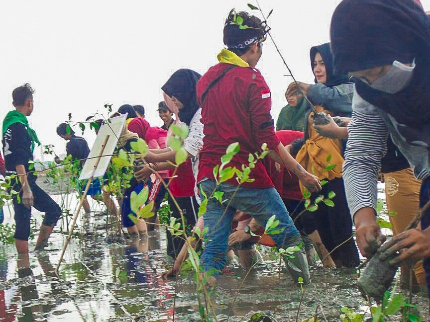 Kabar Desa Pasar Banggi Tanam Mangrove Hutan Kab Rembang