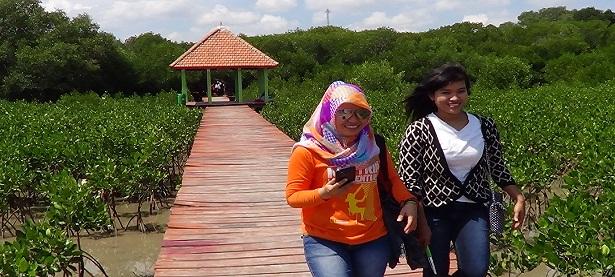 Mengintip Kekurangan Berbagai Usulan Wisatawan Layak Dicermati Hutan Mangrove Pasar