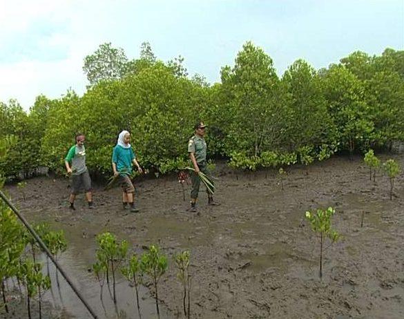 Menikmati Keindahan Hutan Mangrove Pati Jawa Tengah Halnya Wisata Pasar