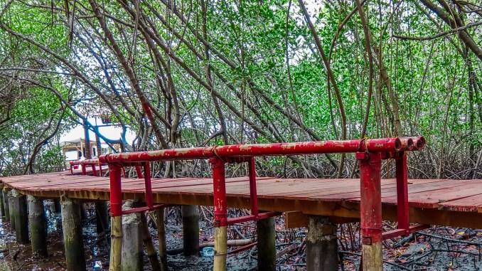Penambahan Jembatan Mangrove Desa Pasar Banggi Salah Satu Wisata Andalan