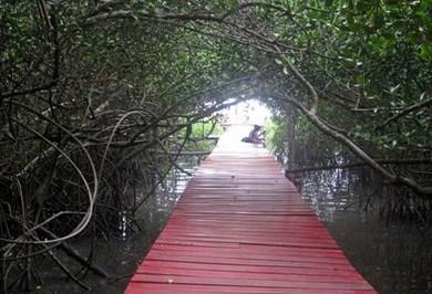 Pesona Keindahan Wisata Taman Mangrove Pasar Banggi Rembang Jawa Tengah