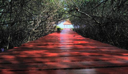Potensi Ekowisata Mangrove Rembang Jawa Tengah Zulfazangqi Hutan Pasar Banggi