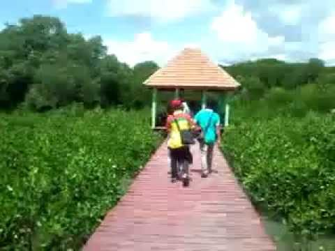 Taman Konservasi Mangrove Jembatan Merah Pasar Banggi Rembang Youtube Hutan
