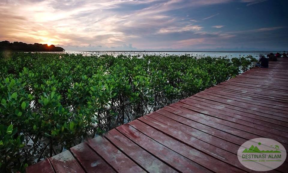 Update Info Jembatan Merah Hutan Magrove Rembang Mangrove Pasar Banggi