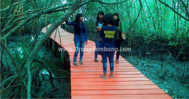 Video Hutan Mangrove Pasarbanggi Kab Rembang Pasar Banggi