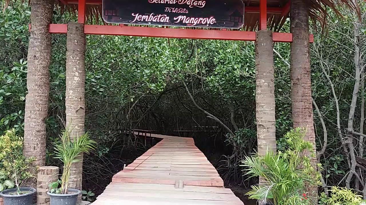 Wisata Alam Hutan Mangrove Dijembatan Merah Kabupaten Rembang Youtube Pasar
