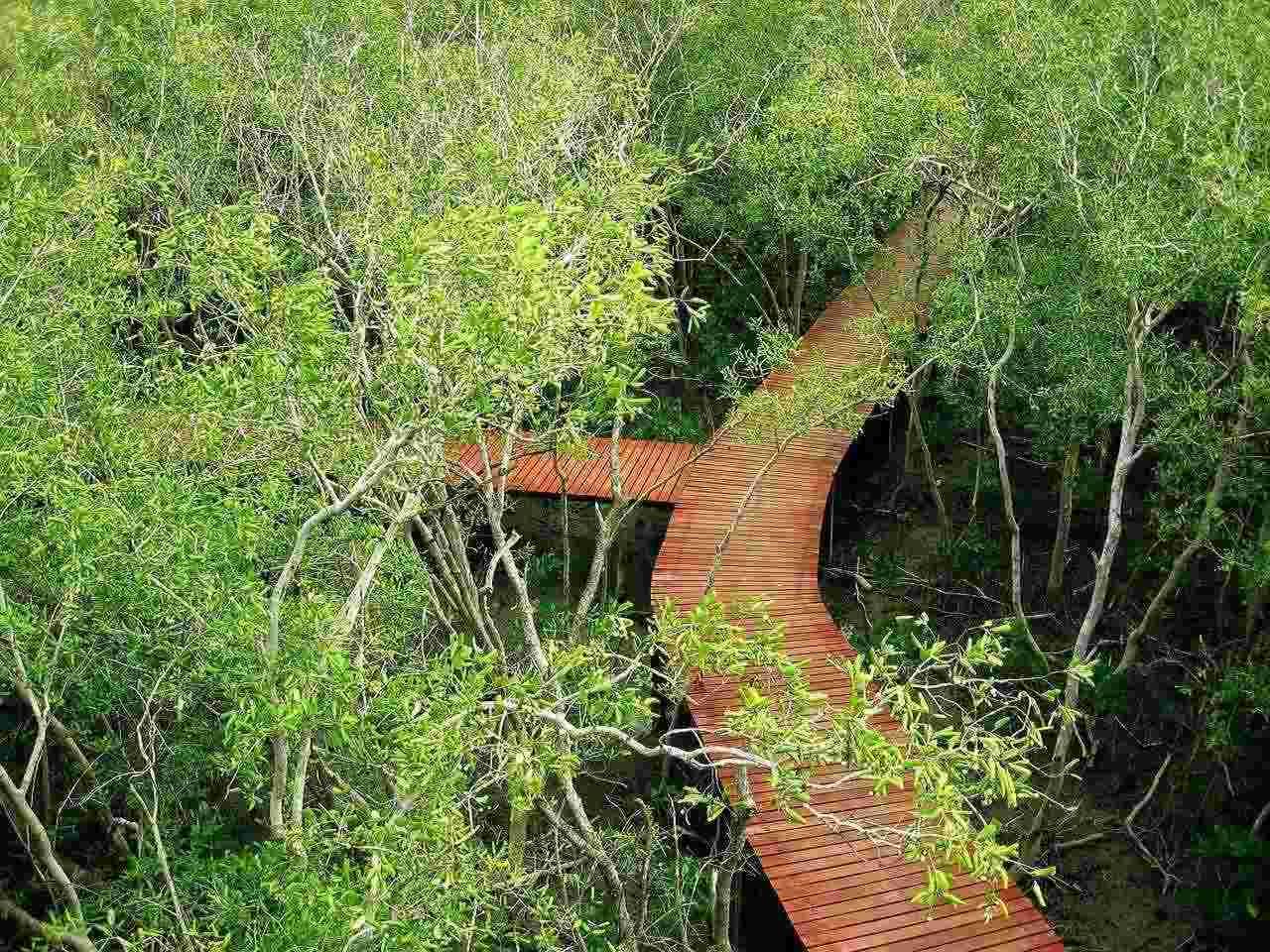 Wisata Alam Hutan Mangrove Rembang Tukang Info Indonesia Map Directory