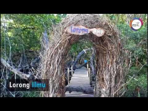 Wisata Hutan Mangrove Desa Kurau Barat Youtube Pasar Banggi Kab