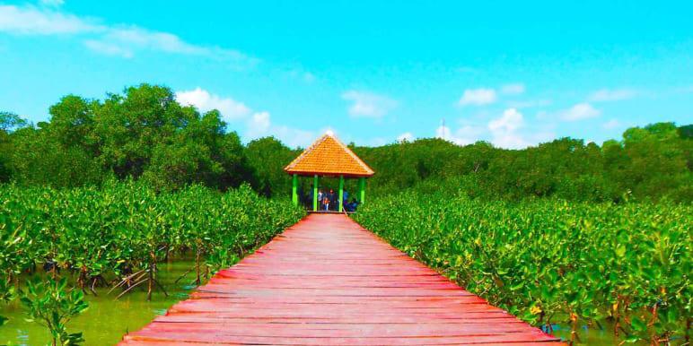 Wisata Hutan Mangrove Kab Rembang Jembatan Merah Jpg Pasar Banggi