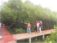 Wisata Hutan Mangrove Rembang Desa Pasar Banggi Kab
