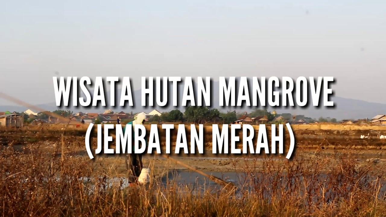 Wisata Hutan Mangrove Rembang Iklan Pariwisata Komunikasi Bisnis Pasar Banggi