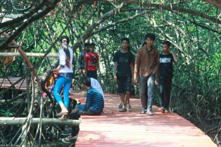 Wisata Irit Hutan Mangrove Rembang Jawa Tengah Roeman Art Konservasi