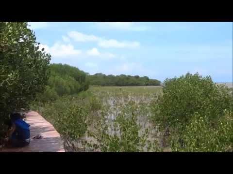Wisata Jembatan Merah Hutan Mangrove Kab Rembang Info Pasar Banggi