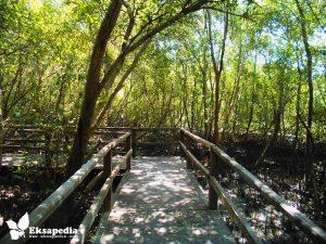 Wisata Mangrove Page 4 Hutan Morosari Demak Jawa Tengah Pasar
