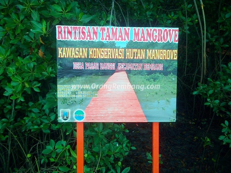 Wisata Hutan Mangrove Kab Rembang Pantai Caruban Lasem