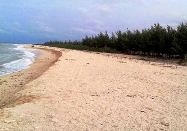 Pantai Karang Jahe Rembang Wisata Bahari 1000 Pohon Cemara Asal