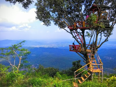 Bukit Cilik Igir Wringin Jawa Tengah Indonesia Rumah Pohon Kab