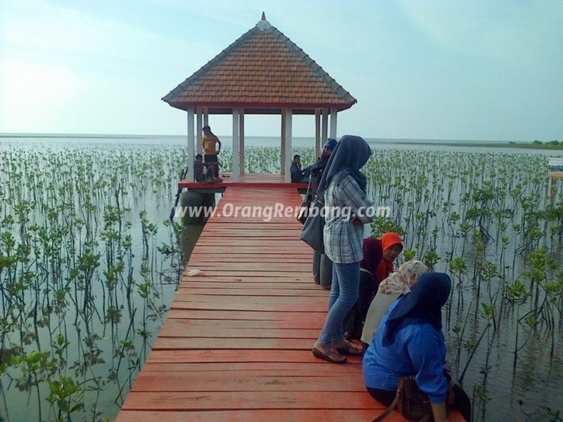 21 Tempat Wisata Populer Indah Rembang Jawa Tengah Indonesiaku Hutan